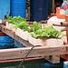 schwimmender Gemüsegarten