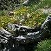 von der Natur geformt: Blumenanlage