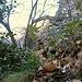 <br />Seltsam, im Wald zu wandern!<br /><br /><br />(Ja, kommt mir auch irgendwie bekannt vor, dieser Satz.)<br />