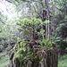 Bosco bonsai su vecchio ceppo 2