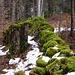 Verfallene Mauer im Wald.