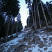 Scorciatoia nel bosco per salire a Dumagns. Come si vede, meglio tenere gli sci in spalla...