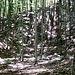 nel bosco di faggi verso la quota m.1431