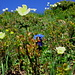 Blumen am Grat