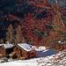 winterliche Farbtupfer, auf Chüebodmen
