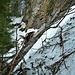 Un arbre arraché par une coulée complique le passage sur l'itinéraire entre la Pierre à l'Ours et la brèche 1430m