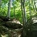 und wieder der urige Waldabstieg
