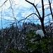 junges Grün (mit Häubchen) vor altem Wald - und Blau