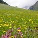 Blumenwiese in allen Farben