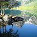 Einfach einmalig und kaum in Worte zu fassen! [http://www.hikr.org/gallery/photo132030.html?post_id=13823#1 Dieselben Bäume 10 Tage später in der Morgensonne], fotografiert von [u Ivo66]