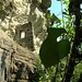 <br />Ein Blatt drängt sich in den Vordergrund. Ist ja klar. Typisch Blätter...!!!