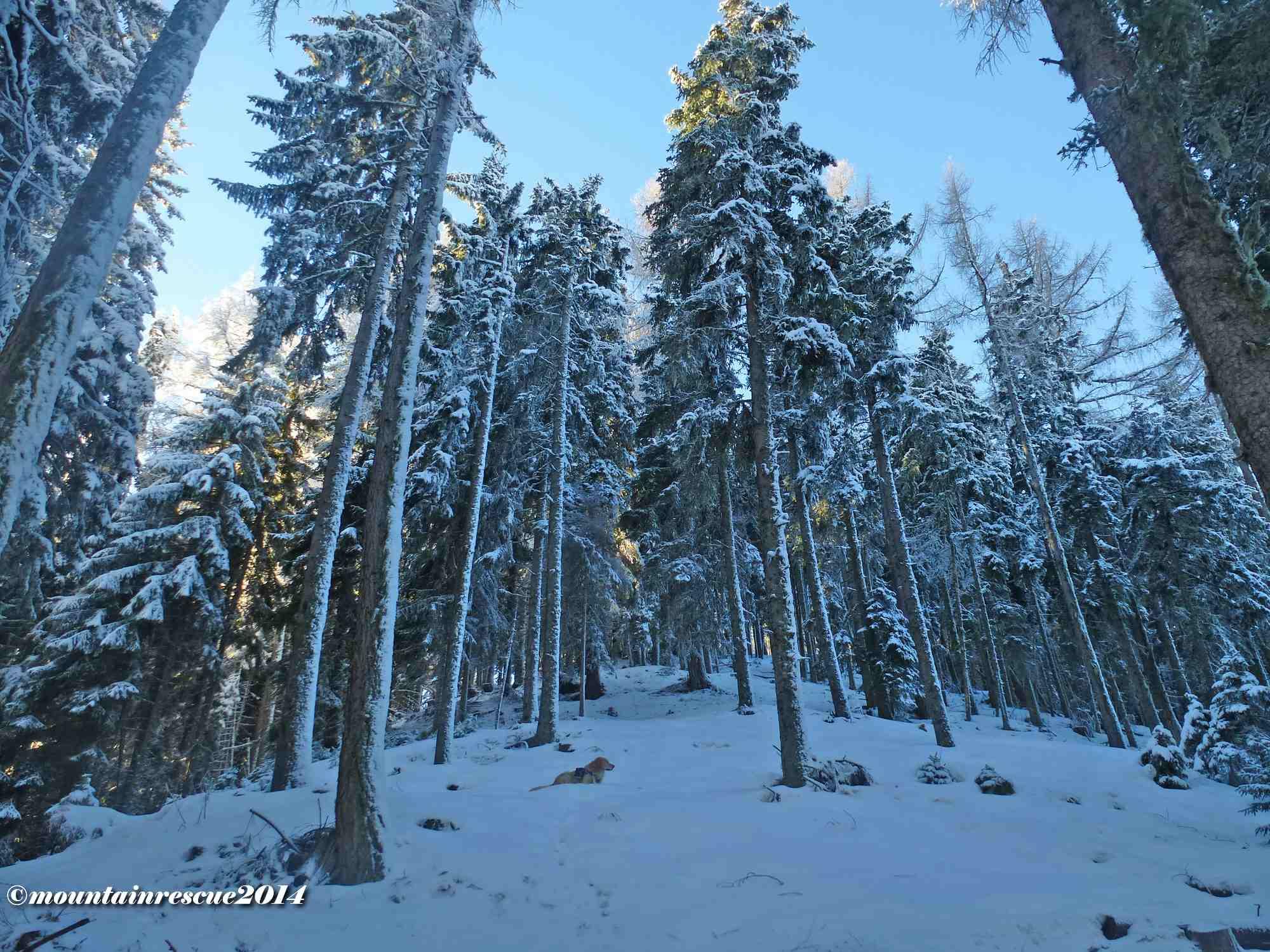 Über lockeren Hochwald geht es dem Gipfel entgegen