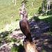 Scultura in legno su tronco tagliato all'Alpe di Sassello