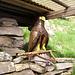 Scultura in legno all'Alpe di Sassello