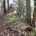 auf dem Gratweg im Riedwald