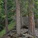 La crête dans la forêt