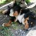 Leuki geniesst das Alpleben