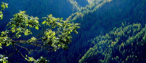 Auf der anderen Talseite die bewaldete Schlucht des Zopatnitzenbachs.