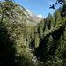 Blick aus dem bewaldeten Umbaltal in Richtung Virgental.