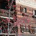 Sapün Dörfji im Januar 2014: Herbstliche Beeren und frühlingshafte Wärme