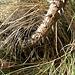 <br />♫♬♩..Born To Be a Thorn...♬♯♫<br /><br /><br />(Born To Be Wild - Steppenwolf)<br />[http://www.youtube.com/watch?v=8Ze949XZoTA]