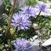 schönsten Blumen
