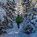 Durch den Wald nach Teuftal