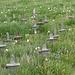 die komische Lawinenverbauung, welche fast aussieht wie ein Soldatenfriedhof