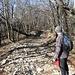 il sentiero spiana ad Alboree Q860