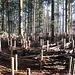 Ein Labyrinth im Wald