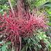Flora am Wegesrand