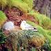 Vögel in Schottland