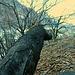 <br />Das ist ein sogenanntes Globetrotter-Blatt (gelber Pfeil).<br /><br />Es ist gerade auf seiner Reise ans Ende des Baumes.<br /><br /><br />Voyage au bout de l'arbre<br /><br />Viaggio al termine dell' albero<br /><br />Reise ans Ende des Baumes<br /><br />Journey to the end of the tree<br /><br />