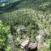 Blick von der Ostkante auf die den Sturz wieder in Besitz nehmende Vegetation