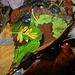 <br />Novemberfarben<br /><br />♫♬♩...Coat Of Many Colors...♬♫♩<br />[https://www.youtube.com/watch?v=c1zJzr-kWsI]