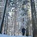 Auf dem Höhronen (1229m). Der höchste Punkt liegt im tief verschneiten Wald.