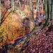 Ein Kleinod, der Bach in der Drachenschlucht. Lebensraum von Feuersalamander und Gebirgsstelze.