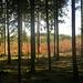 Im Osterwald