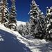 unterwegs im Winterwald