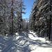 unterwegs im tiefverschneiten Wald