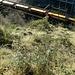 <br />Ich warte, bis dieser bunte Zug vorbei gefahren ist.<br /><br />Sonst fange ich beim Abstieg noch an, die Waggons zu zählen - ich kenne mich.<br /><br /><br />♬♫♩...Choo Choo Mama...♬♫♩<br /><br />(Ten Years After)<br />[http://www.youtube.com/watch?v=k1VdfOioSAE]