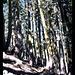 Pfad zum Cold Boiling Lake, Lassen Volcanic NP, Kalifornien, USA