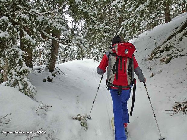 Im Wald, hat der dichte Baumbewuchs nicht viel Schnee durchgelassen