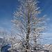In diesem Winter ein seltener Anblick...