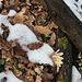 Im Aufstieg zum Ovčín - Am Boden: Oberflächlich dominieren noch die Zutaten von Herbst und Winter. <br />Doch im Untergrund lauert bereits der Frühling.