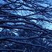 alberi di braccia....