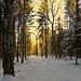6.2.2014 Winterwald