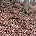 Wunderschöner Buchenwald säumt den Aufstiegsweg. Durch die Blätter des Vorjahres und die ungefrorenen Böden ergibt sich hier ein ziemliche Schlitterpartie