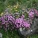 frühlingshafte Blumenpracht auf dem ganzen Weg
