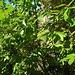 <br />Im Sommer 2013<br /><br />Im Heidenhaus drin<br /><br /><br />Blick gegen Norden (haha)<br /><br /><br />Blauer Pfeil  ➙ Schutzwand<br /><br />Roter Pfeil ➙ Mauer beim Eingang <br /><br />Gelber Pfeil ➙ Frontmauer (vom Talboden aus sichtbar)<br /><br />